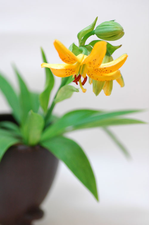 今日の言葉:夏目漱石